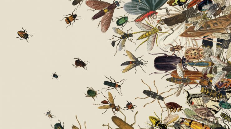 insect extinction